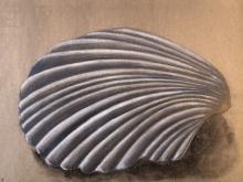 MUSZLA, ołówki, szary papier, A4 (small)