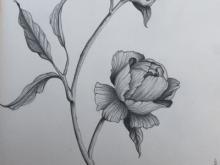 PIWONIE 2, ołówki, papier, A4 (small)